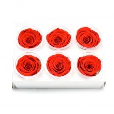 Set 6 Trandafiri Criogenati - Rosu aprins