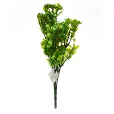 Kalanchoe verde
