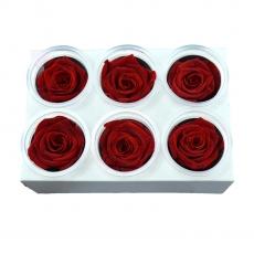 Set 6 Trandafiri Criogenati - Rosu C21-94