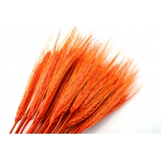 Spice portocalii