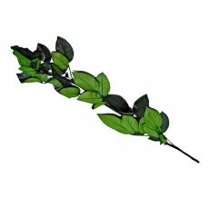 Tulpina pentru Trandafiri Criogenati 60 cm