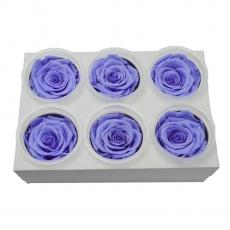 Set 6 Trandafiri Criogenati - lila C21-96