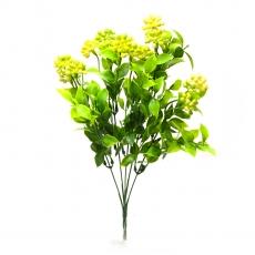 Flori buchet Kalanchoe mare verde cu galben